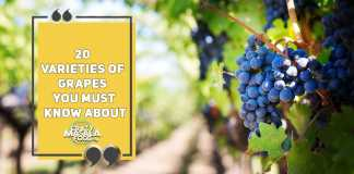 20 Varieties of Grapes You Must Know About
