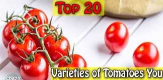20 Varieties of Tomatoes You Must Know About